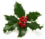 Christmas-Holly